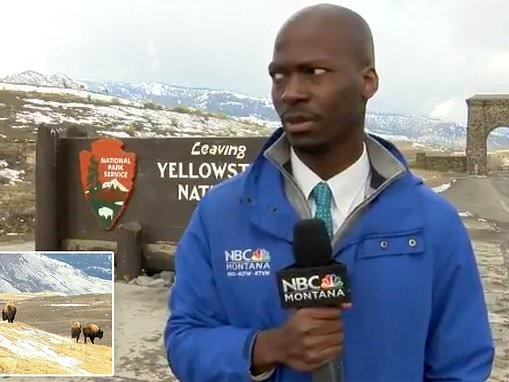 'I ain't messing with you!': Close call moment when reporter sees bison at Yellowstone National Park
