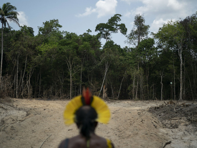 Amazon deforestation hits highest rate in over a decade