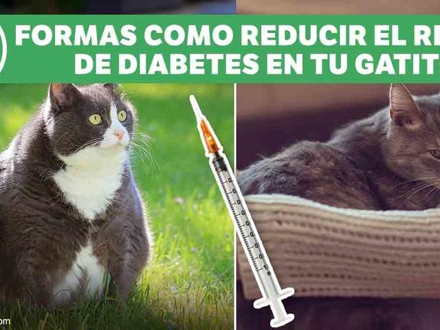 Dos Factores que Pueden Acelerar el Riesgo de Diabetes en Tu Gato