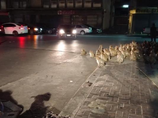 Hundreds of monkeys overrun Thailand street