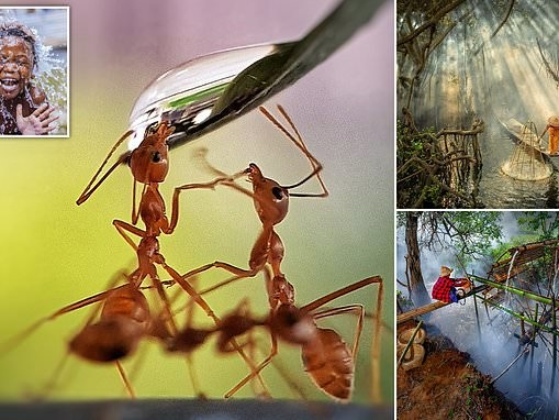 Best water pictures from around the globe feature thirsty ants and a boy washing in Tanzania