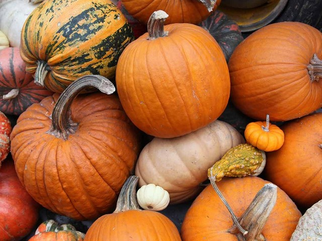 What's the Difference between a Carving Pumpkin and a Pie Pumpkin?