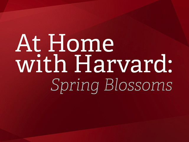 At Home with Harvard: Spring Blooms