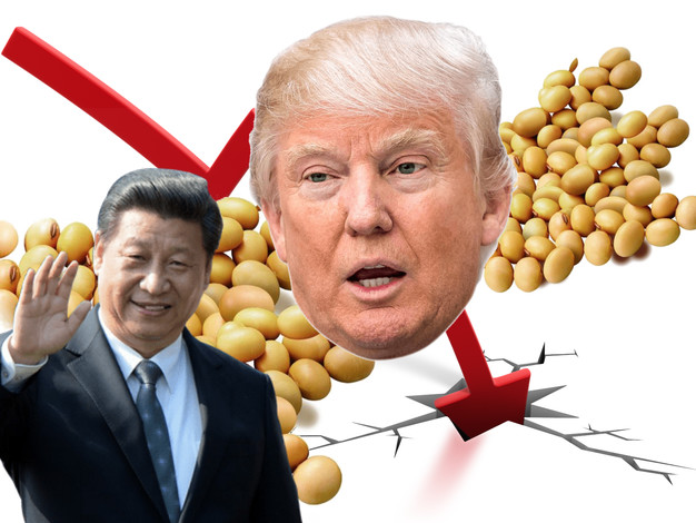 Soybean Prices Plunge To Six Week Low On Lack Of China Buys
