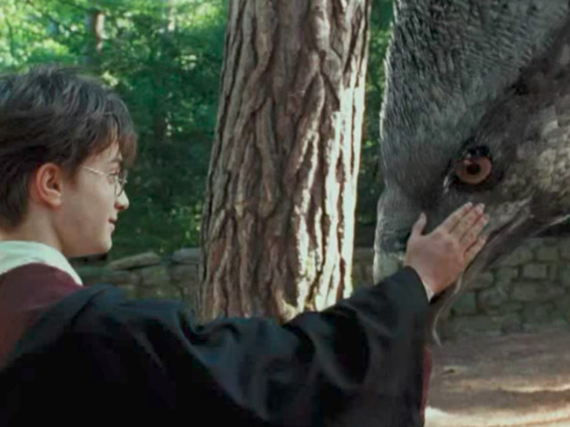 Buckbeak Slyly Pooped Onscreen In 'Harry Potter' And You Didn't Even Know