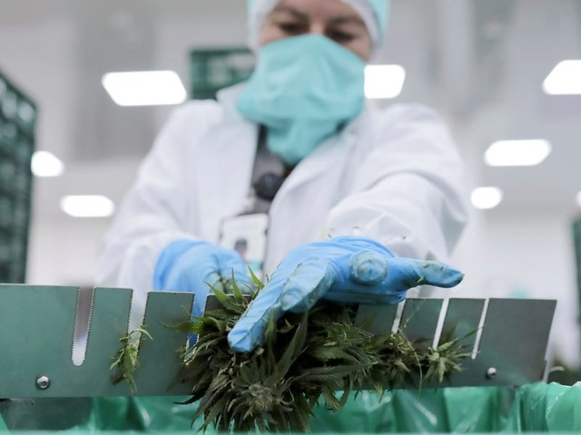 CULTIVATED: A wave of cannabis layoffs, and venture capital gets wary as headwinds mount