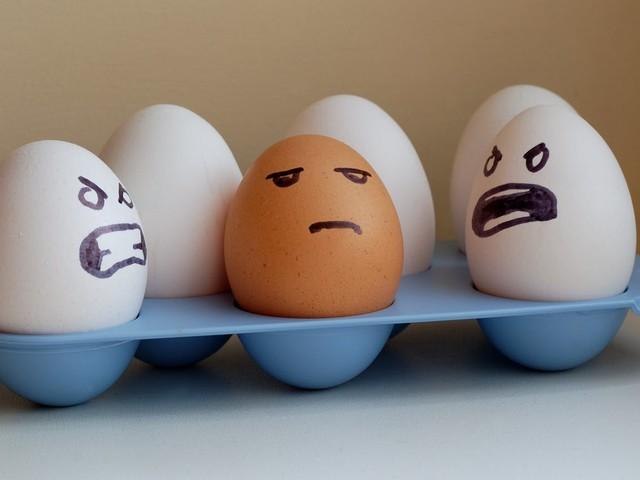 Tired of eating eggs?
