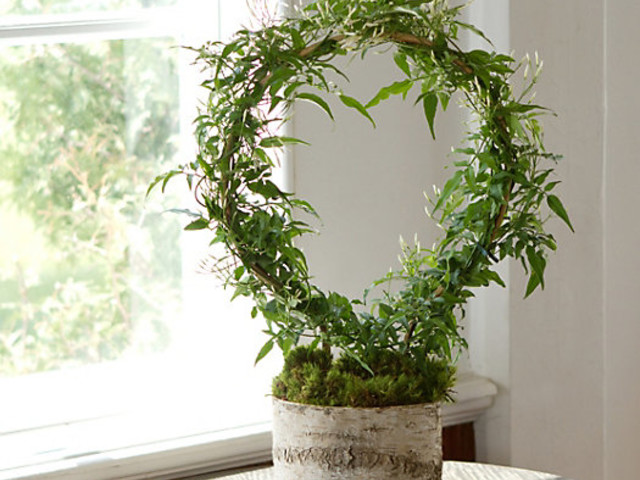 5 Bedroom Plants for Better Sleep & How to Take Care of Them