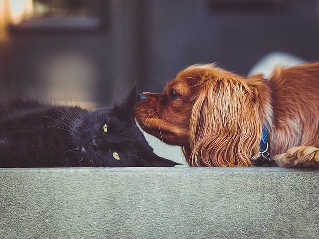 Comment on URGENT Advisory: Coronavirus and Companion Animals by Lauren
