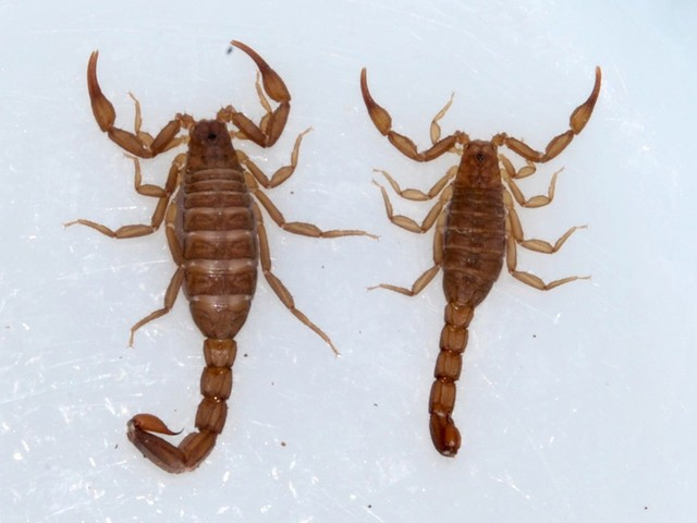 Passenger has a nasty surprise on United Airlines flight: A scorpion stung her