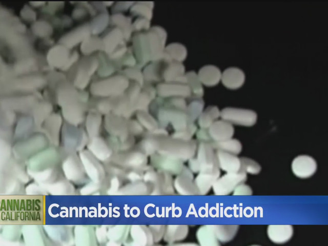 Solution To Opioid Epidemic May Come From Cannabis