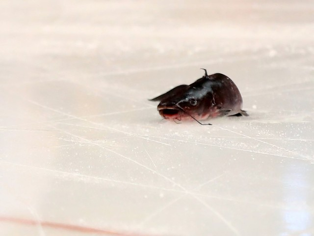 Predators fans throw catfish. What should fans of other NHL teams throw?