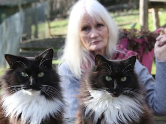Celia Hammond Animal Trust Invaded By Hunt's Hounds, Sussex Police Investigating After Cats Go Missing