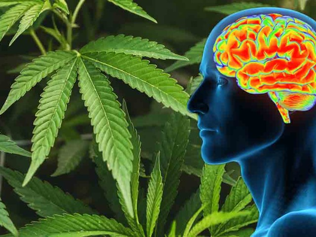 CBD Has Unique Ability to Cross Blood-Brain Barrier