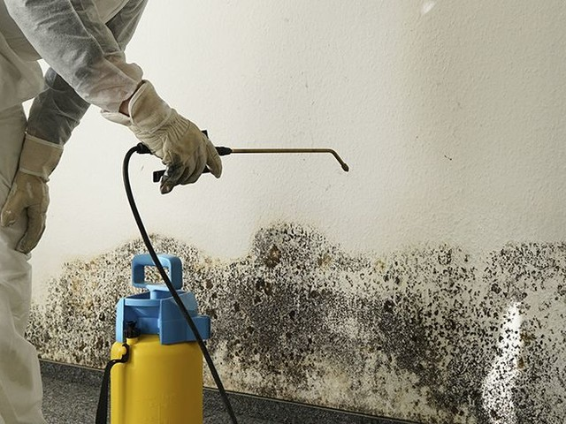 The Best Black Mold Removal Companies Near Me