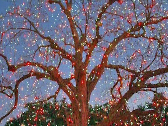 Holiday Cheer: Highland Park IlluminatesSister Tree To Beloved 'Big Pecan Tree'