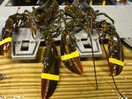 US Lobster Exports To China PlungeAmid Escalating Trade War