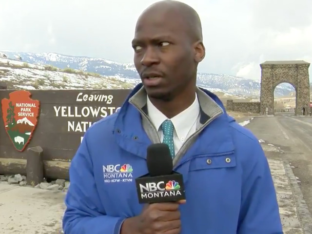 Watch this TV reporter react as a herd of bison interrupts his broadcast