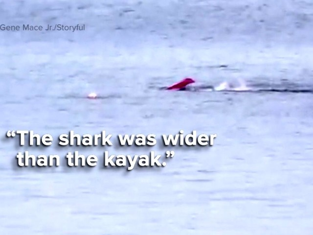 VIDEO: Great White shark attack in California