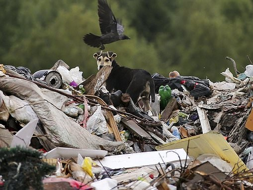 More than 350,000 tonnes of food to be dumped in landfills each year