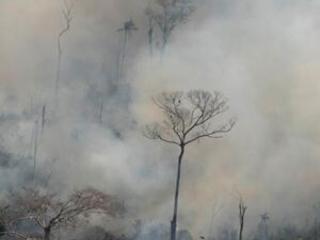 Bolsonaro to send army to contain Amazon fires