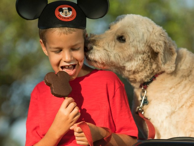 Vox Populi: Thoughts From the DISBoards On Allowing Dogs at Walt Disney World Resort Hotels
