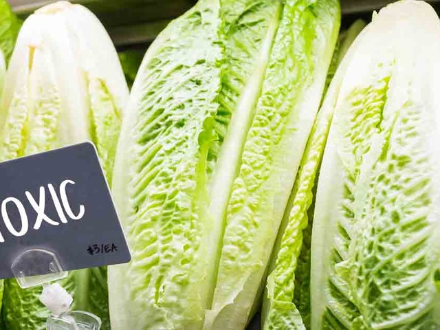 Why Is so Much Romaine Lettuce Toxic?