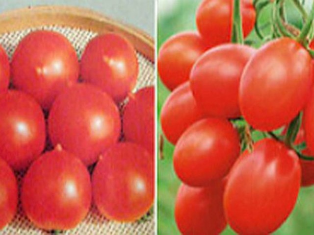 Cherry Tomatoes vs. Grape Tomatoes: What's the Difference?