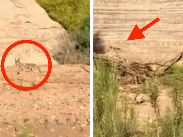 Guy Spots A Roadrunner Outsmarting A Coyote In Real Life