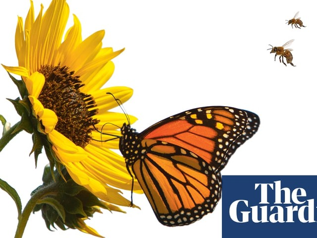 Gardening can save the planet. How? Start with your soil | Alys Fowler