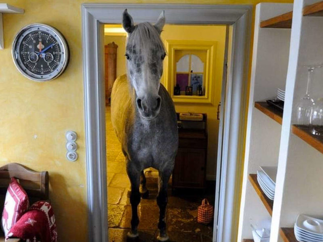 Random Horse Wanders Into Guy's House And Makes Herself At Home