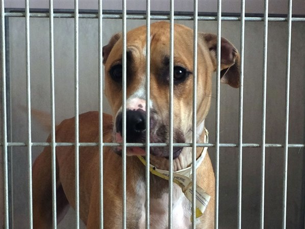 Lucas County Dogs for Adoption: 12/7