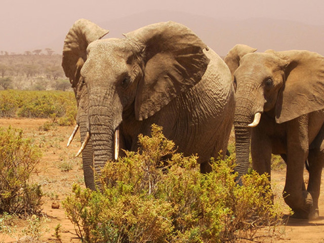 Animal Rights Groups Sue the Department of the Interior Over Trophy Hunting