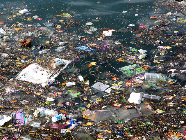 7 things you can do right now to help save the oceans