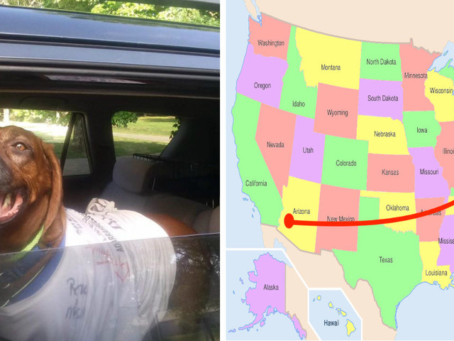 Dog Goes Missing From Home — And Turns Up 2,000 Miles Away