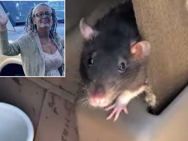 San Diego woman gives up 300 rats she lived with in her van