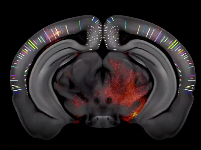 Scientists mapped an entire mouse brain, and the results are mesmerizing