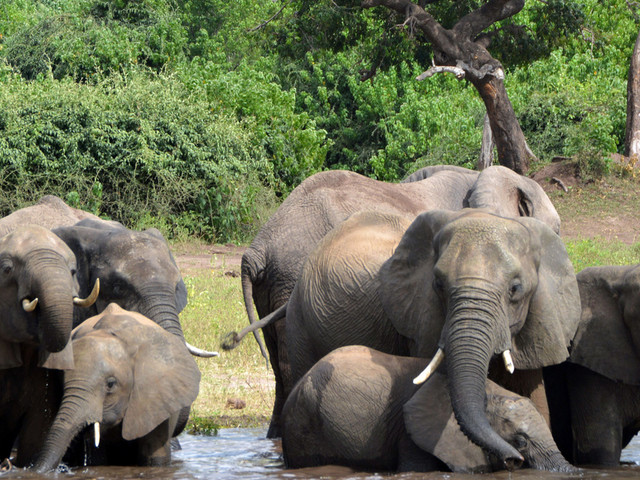 Botswana hires Hollywood firm to fight elephant hunting PR