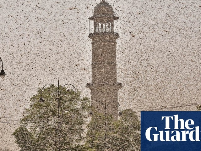 'Make noise and don't panic': India tries to ward off locust invasion