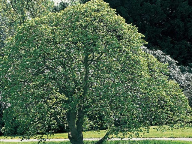 """""""Who Put Bella In the Wych Elm?"""" is a question that's haunted Worcestershire for nearly 80 years"""