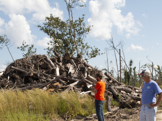 Florida timber farmers face tough choices year after Michael