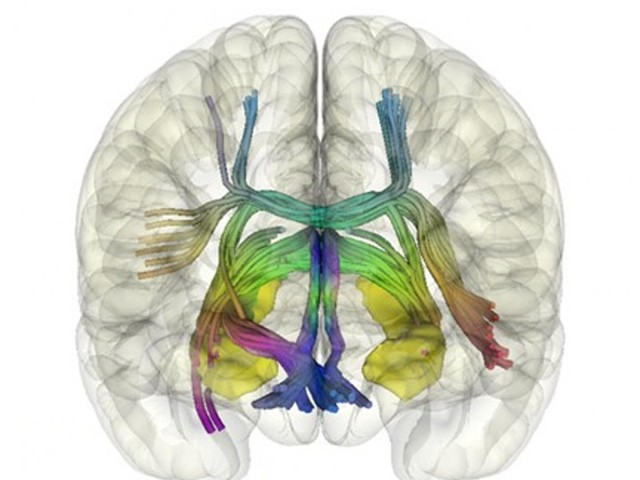 The neural mechanism of autonomous learning uncovered by researchers at IBEC