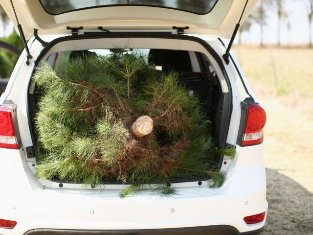 The Case For Buying Your Christmas Tree Online