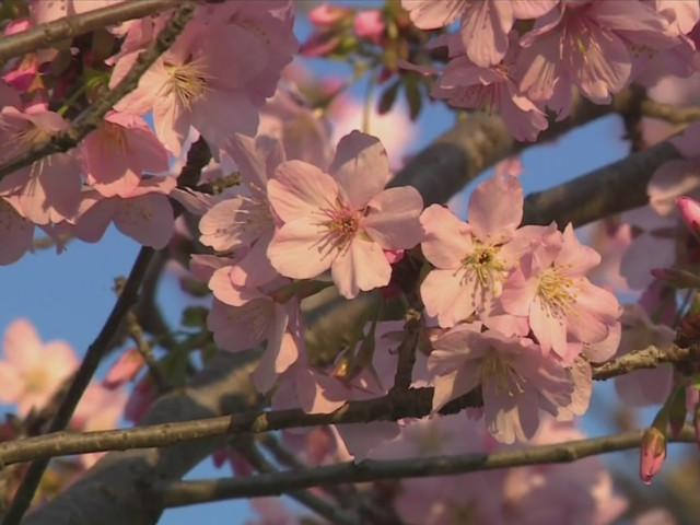 Heavy Rains: Good For Drought, Bad For Allergy Sufferers