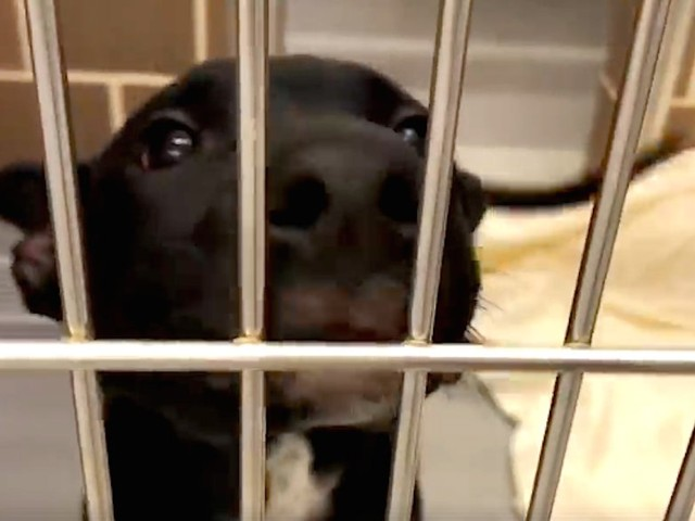 Short Video Shows Why The Best Thing You Can Do For The Holidays Is Adopt A Dog