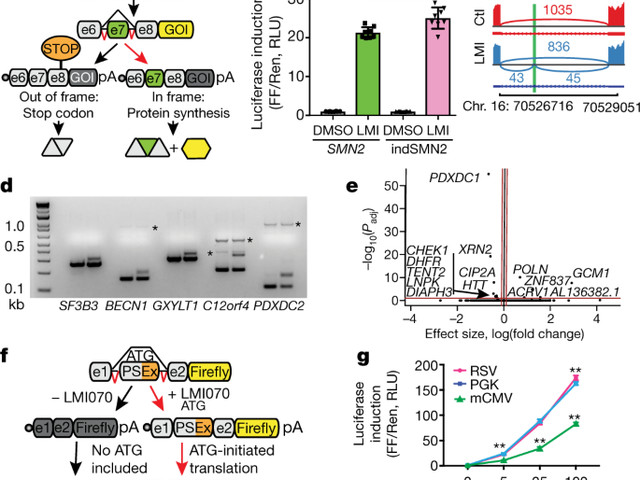 Regulated control of gene therapies by drug-induced splicing