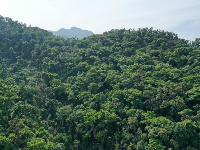 Tropical forest soils capture CO2 under elevated nitrogen deposition