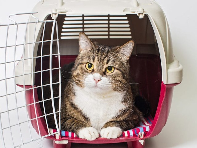 The 5 best airline cat carriers in 2021, according to pet safety experts and extensive testing