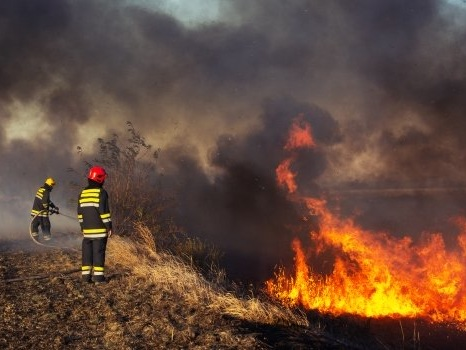 Three Things Jokowi Could Do Better to Stop Forest Fires and Haze in Indonesia