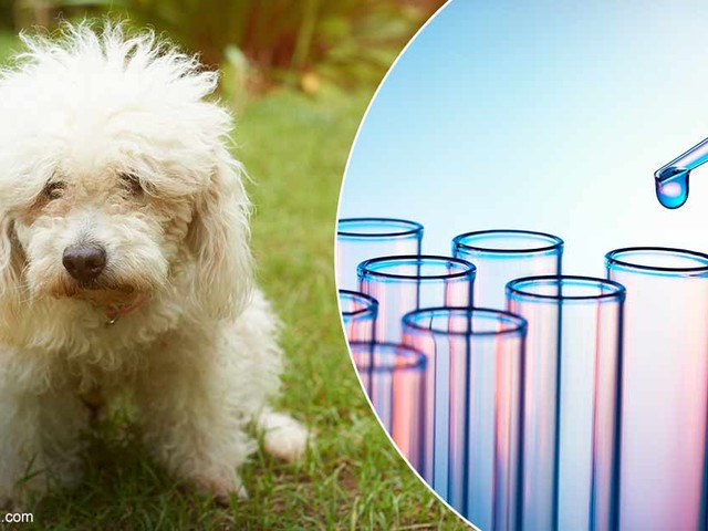 Breakthrough Treatment Saves Pets From Euthanasia — Could It Help Yours Too?